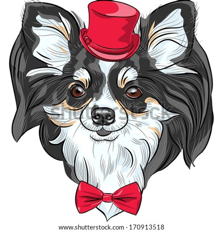 ... cute hipster dog Chihuahua in the red hat with bow tie - stock photo