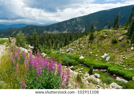 Colorado mountain landscape with summer wild flowers - stock photo