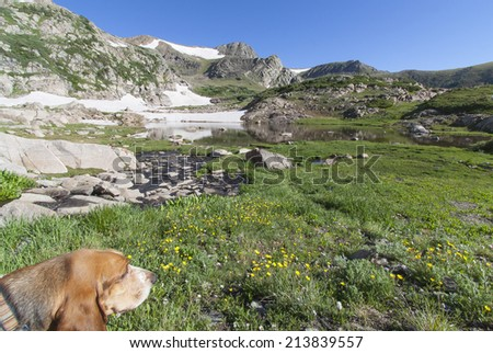 Colorado's Indian Peaks Wilderness - basset hound looks out on  Betty Lake