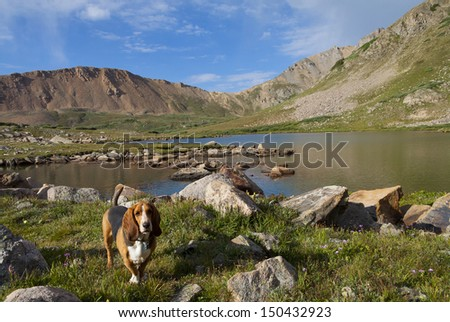 Colorado's Rocky Mountains - Basset Hound at the Continental Divide at Herman Lake