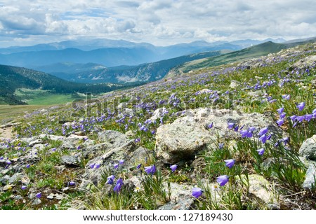 Colorado summer mountain landscape with blooming wildflowers - stock photo
