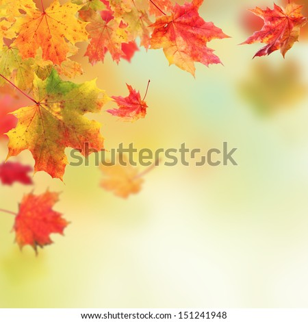 Colored autumn leaves falling down on blur background - stock photo