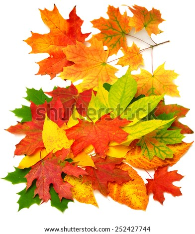 Colored autumn leaves isolated on white background - stock photo