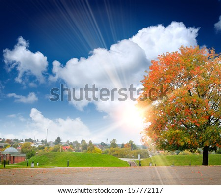 Colored autumn tree on the landscape