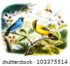 colored bird in withe background - stock vector