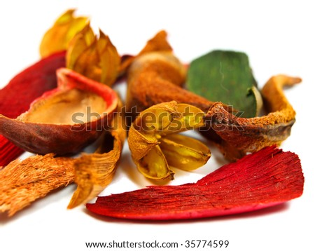 Colored blooms, leaves and bark, isolated on white