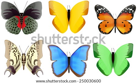 Colored butterflies isolated