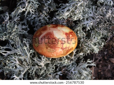 Colored Easter egg using an onion peel. Easter egg on moss in the forest.  - stock photo