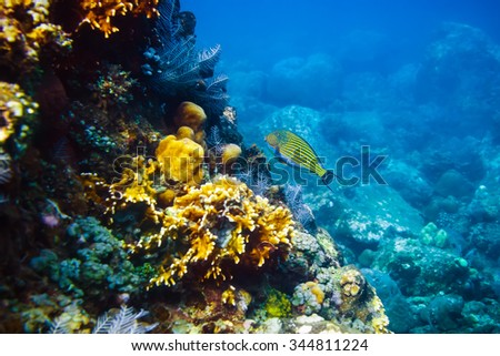 Colored fish and corals in the ocean - stock photo
