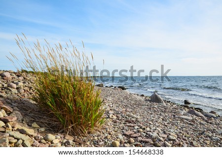 Colored grass plant at the stony coast of the Baltic sea in Sweden - stock photo