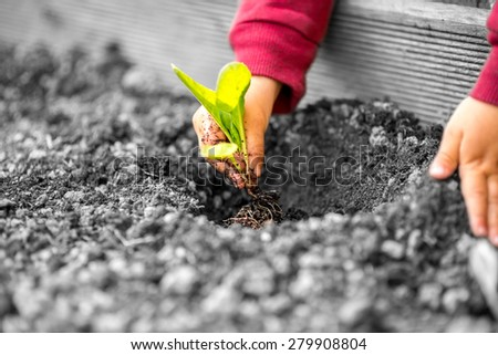 Colored hands of a child with red sleeves planting a small plant with green leaves in contrast with the grey polluted soil and environment. - stock photo
