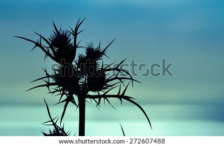 Colored image of thistle flowers at dawn - stock photo