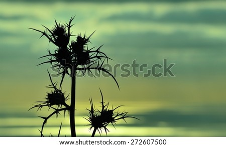 Colored image of thistle flowers in foreground on skyline  at sunrise - stock photo