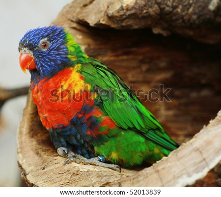 colored parrot - stock photo