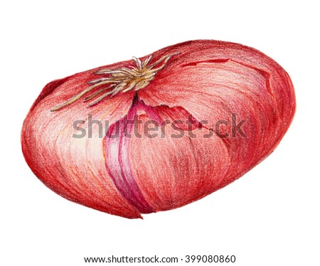 colored pencils image of oval purple onion, isolated on white background