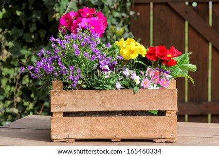 Colored potted plants - stock photo