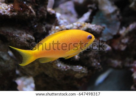 Colored seabed fish in aquarium