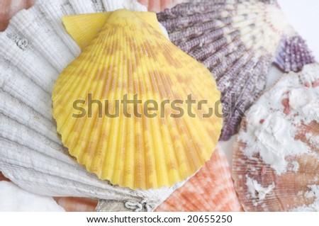 Colored seashell - stock photo