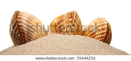 Colored shells on sand pile isolated on white