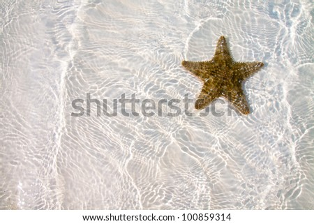Colored Starfish on white sand and crystal water - stock photo