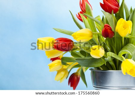 Colored tulips on blue background