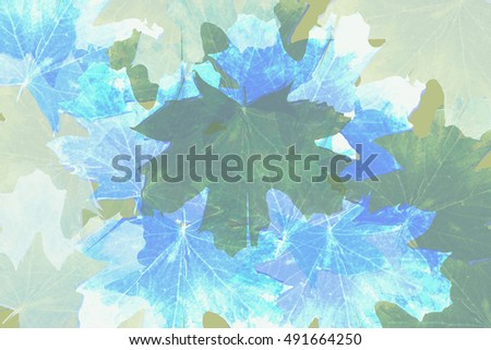 Colorful abstract, nature pattern. Leaf background. Maple leaves. Double exposure. Light blue