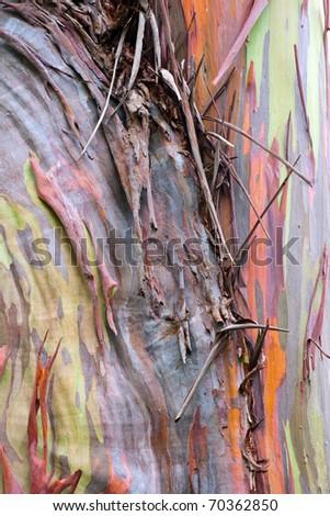 colorful abstract pattern of rainbow eucalyptus tree bark - stock photo