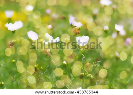Colorful abstract spring background with bokeh effects. Defocuse - stock photo