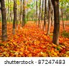 colorful alley in autumn park - stock photo