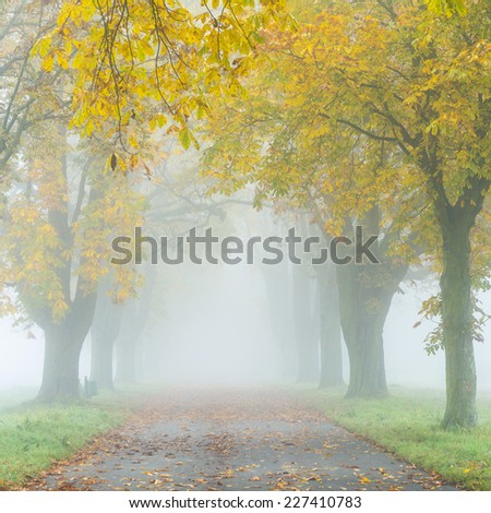 colorful alley in fog with trees in autumn