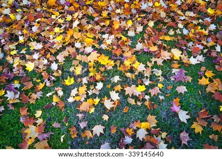 Colorful and bright background of fallen autumn leaves on grass.