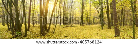 Colorful and foggy autumn forest - stock photo