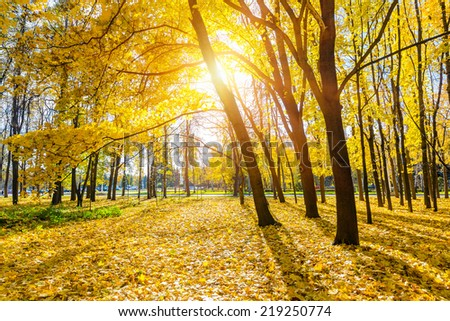 Colorful and sunny autumn park - stock photo