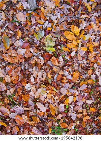 Colorful and vivid autumn leaves in different colors (yellow, red, purple, pink...) - stock photo