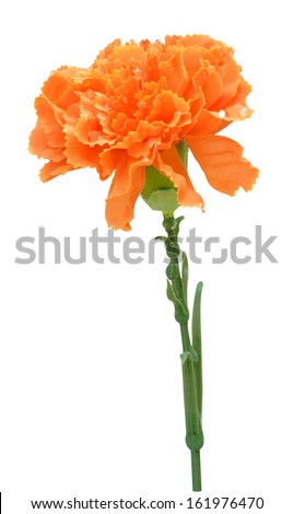 Colorful artificial flowers. - stock photo