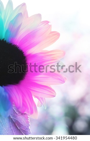 Colorful artistic sunflower close up - stock photo