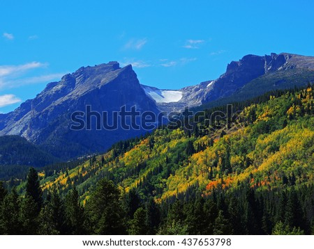 colorful aspen trees  in rocky mountain national park, colorado        - stock photo