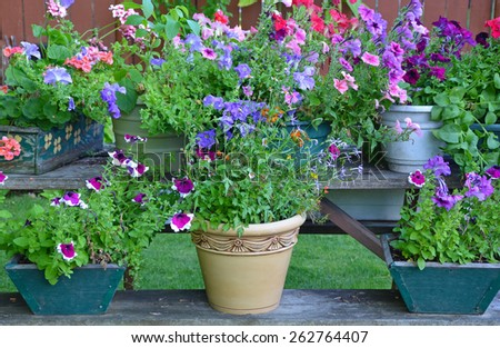 Colorful assortment of summer flowers in planters