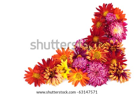 Colorful asters, floral border on white background - stock photo
