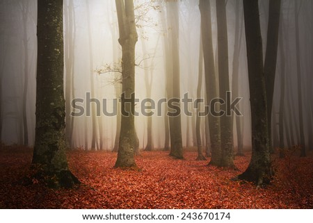 Colorful atmosphere in misty forest - stock photo