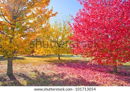 Colorful autumn - stock photo