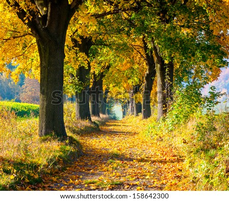 Colorful autumn alley - stock photo