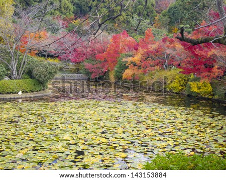 Colorful autumn at Lotus pond in Ryoanji Temple in Kyoto, Japan - stock photo