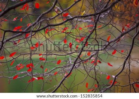 Colorful autumn. Autumn in New York - stock photo