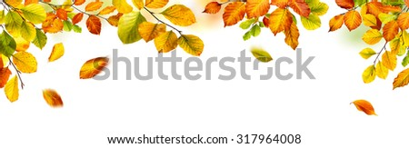 Colorful autumn beech leaves border, studio isolated on pure white background, wide panorama format - stock photo