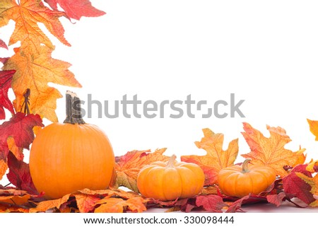 Colorful autumn decoration on a white background