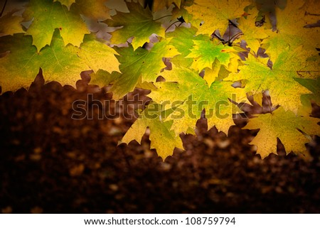 Colorful Autumn  fall leaves background with season colors - stock photo