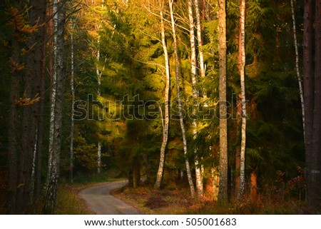 Colorful autumn forest