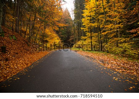 Colorful autumn forest. Beautiful rural scenery.