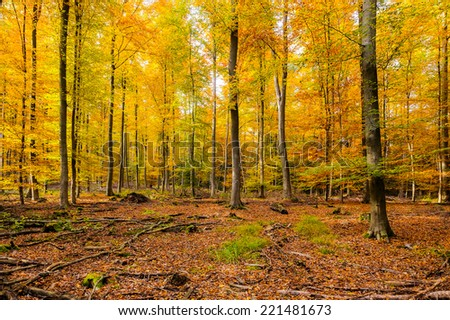Colorful autumn forest in Germany